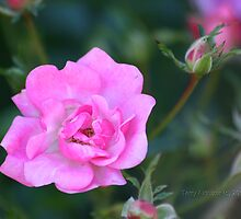 Tiny Autumn Pink Roses by Terry Aldhizer
