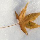 Golden Leaf on Snow by Lorrie Davis