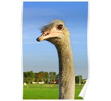 Ostrich, I got my Eye on you Poster