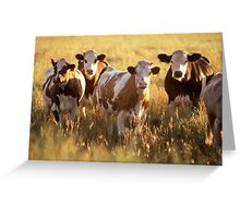 Adorbz Cattle Greeting Card