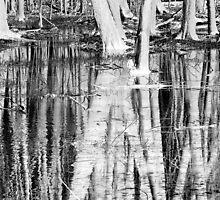 Wet Woodlands by David Schroeder