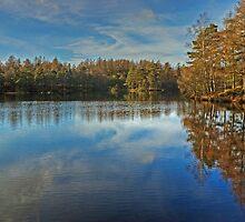 November at High Dam, Finsthwaite by Jamie  Green