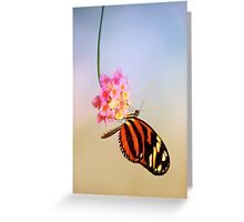 Tiger longwing butterfly Greeting Card