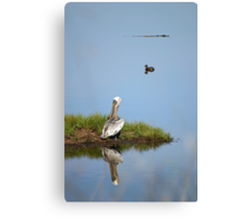 The Pelican, Duck and Gator Canvas Print