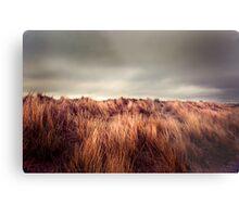Marram Grass.. Metal Print