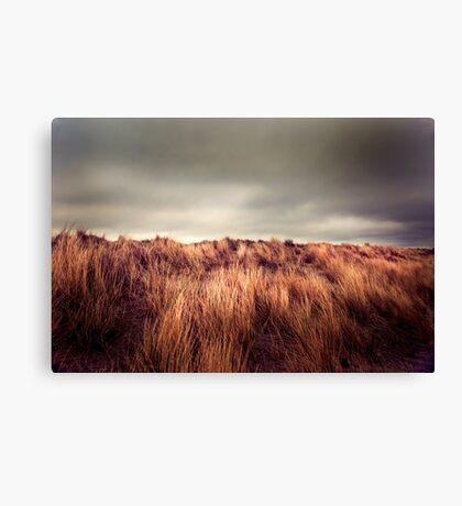Marram Grass.. Canvas Print