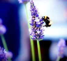 Honey Bee by photo-kia