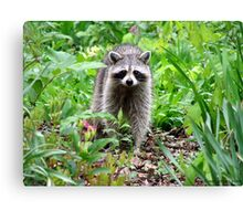 Rainy Day Raccoon Canvas Print