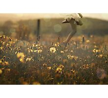 Field Of Past Wishes Photographic Print