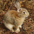 Bunny by AlexMac