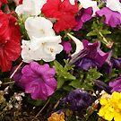 Pretty Flowers  by AlexMac