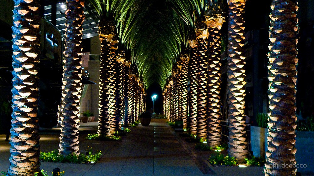 Palm Archway by phil decocco