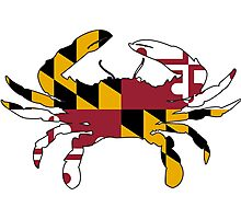Maryland Flag Crab Photographic Print