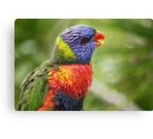 Rainbow Lorikeet in the Rainforest  Canvas Print