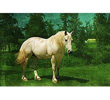 Earthbound Unicorn Photographic Print