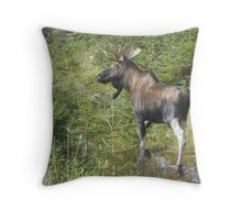 Why Did the Moose Cross the Road? Throw Pillow
