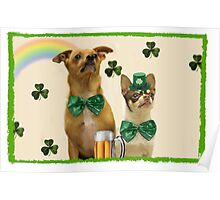 St. Patrick's Day Chihuahuas Poster