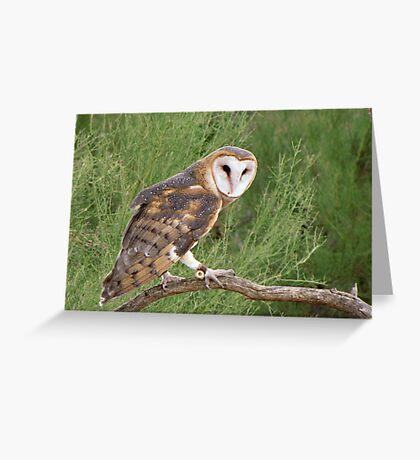 Barn Owl ~ Captive Greeting Card