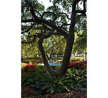 Prescott Park Flower Garden Photographic Print