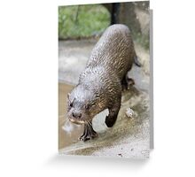 Super Hairy-nosed Otter Greeting Card