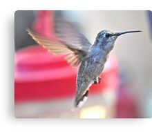YOUNG FEMALE ANNA'S IN FLIGHT TO FEEDER-2 Canvas Print