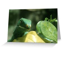 Green Lizard Looks On Greeting Card