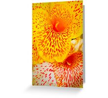Beautiful Colours Greeting Card