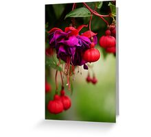 Fuschia Greeting Card