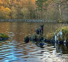 Tarn's Adventures at High Dam by Jamie  Green