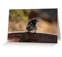 Towel Please! New Holland Honey Eater after Bathing Greeting Card