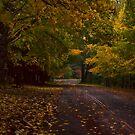 Mount Wilson, NSW by Malcolm Katon