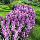 River of Purple - Bed of Hyacinths by MidnightMelody