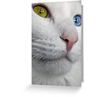 Do Cats Wonder About The Meaning of Life? Greeting Card