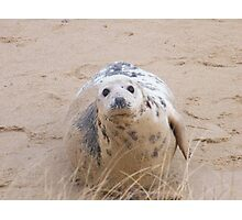 The Careful Mother Seal Photographic Print