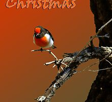 Merry Christmas Red Robin by Julia Harwood