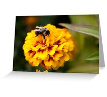Lunchtime for a Bee Greeting Card