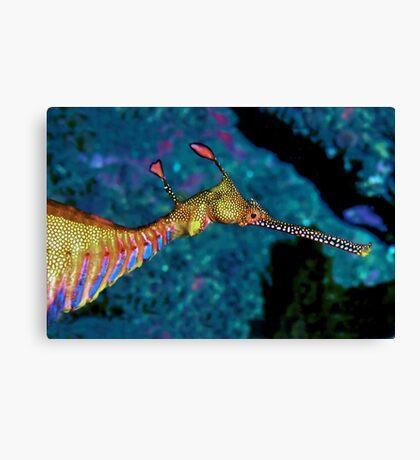 Weedy Sea Dragon Canvas Print