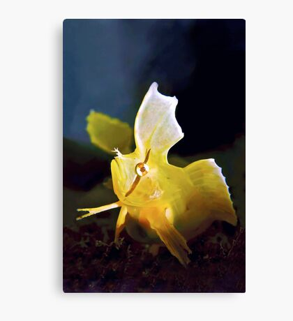 Golden Weedfish Cristiceps aurantiacus Canvas Print