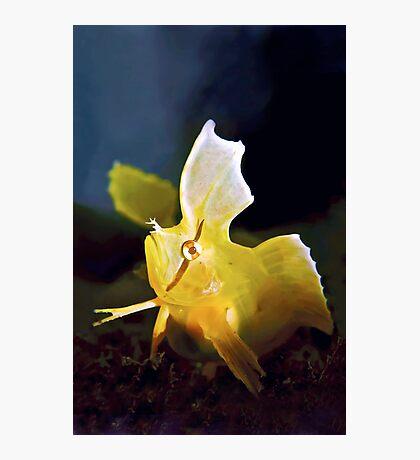 Golden Weedfish Cristiceps aurantiacus Photographic Print