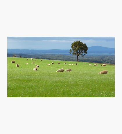 Greener Pastures Photographic Print