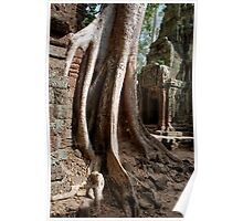 Roots - Angkor Temples, Cambodia Poster
