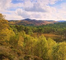 Caledonian Forest, Glen Affric by Tim Haynes