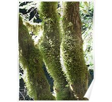 Curves and Moss Poster