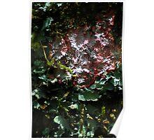 Lichens - Bolivia Poster