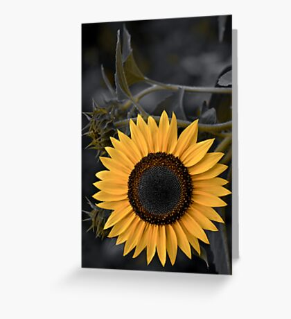 Sunny Side Greeting Card