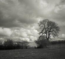 Spring Landscape by photontrappist