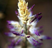 Fall Wheat by JustSaul