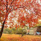 Autumn Rush by AwaisYaqub