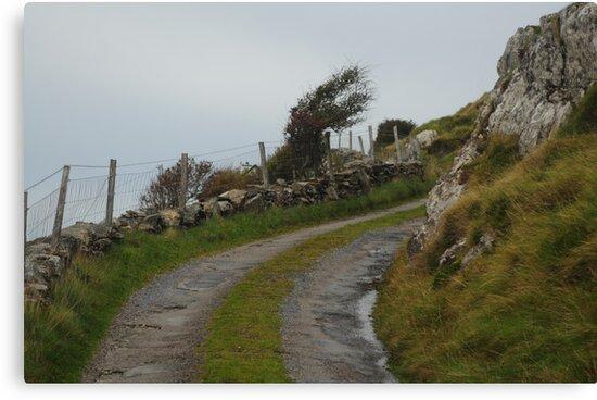 Winding road to the coast by Karin  Funke