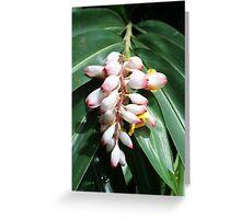 Fabulous Flowers in Fiji Greeting Card